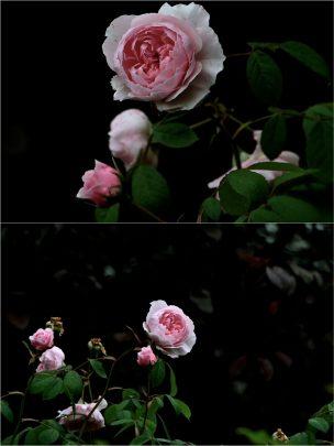 Blume Conver